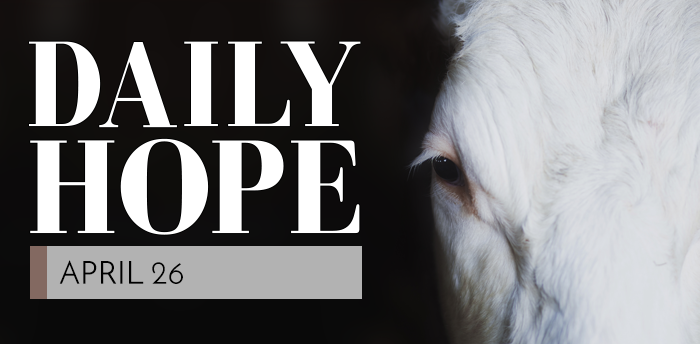 daily-hope-apr26